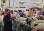 سهيلة .. فلسطينية تمتهن تجارة المواشي منذ 40 عاماً