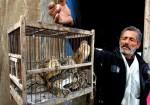 طائر الفر الأوروبي.. ضحية الصيد الجائر بغزة