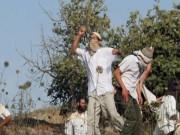 مستوطنون يهاجمون قرية التوانة