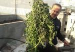 """غزة.. مخصّباتٌ زراعية محلية بديلًا عن المستوردة من """"إسرائيل"""""""