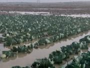 الاحتلال يواصل إغراق أراضي المزارعين بمياه الأمطار شرقي غزة