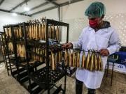 سمك الرنجا المعدّ للعيد في غزة