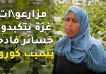 مزارعو/ات غزة يتكبدون خسائر فادحة بسبب كورونا