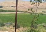 الاحتلال يستولي على أكثر من 11 ألف دونم في الأغوار