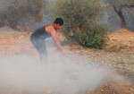 حرائق ضخمة تلتهم مناطق حرجية واسعة في سوريا ولبنان
