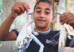 فيديو/ سلطعونات البحر  تزين شباك صيادي غزّة