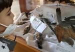 متحف التاريخ الطبيعي.. حارسُ البيئة الفلسطينية الأمين (فيديو + صور)