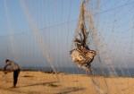 الطيور والأرانب البرية ضحايا الفقر