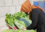 """""""الزراعة العضوية"""" شبّان يدقون جدار خطر يواجه الناس في غزّة"""