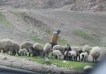 مشاهد من الأغوار الوسطى
