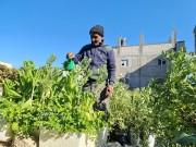 بساط الأسطح الأخضر يكسر رمادية غزة