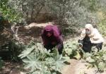 حرب إسرائيلية مستمرة ضد مزارِعات شرق القطاع