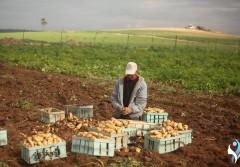 بين ناريّ المعابر والكهرباء.. معاناة مزارعي قطاع غزة تتفاقم